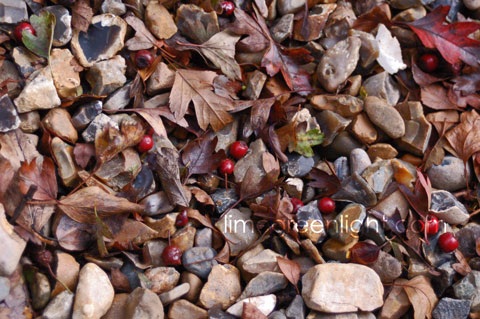 pebbles brown leaves and red berries